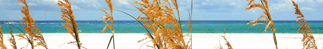 Destin Florida sea oats